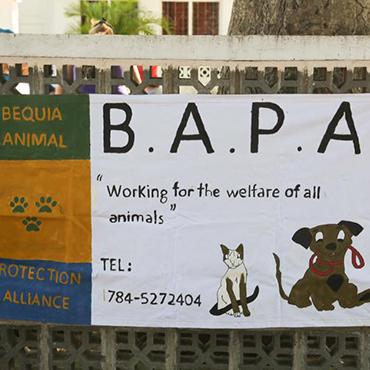 Project 1: BAPA